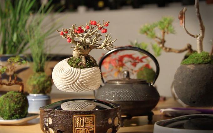 Air Bonsai 5