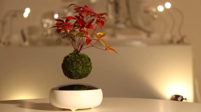Air Bonsai 6