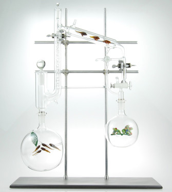Intricate Hand-Blown Scientific Glass, Filled with Flora and Fauna