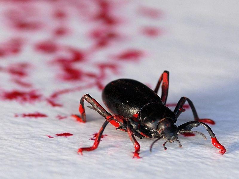 Steven Kutcher insect art 1