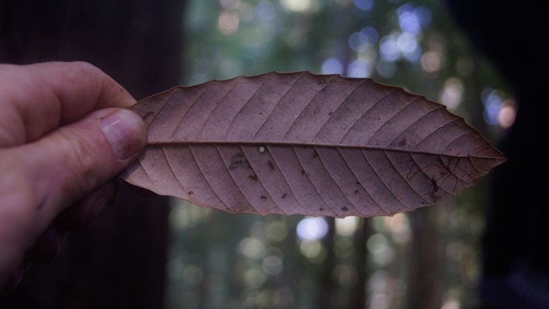 Kebet Ridge pinhole lens