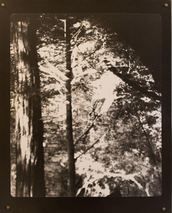 Kebet Ridge photo