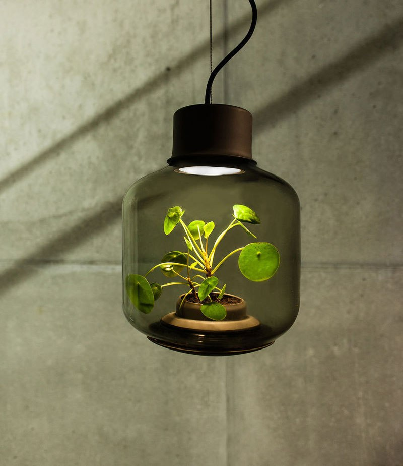 Plant Lamp 2
