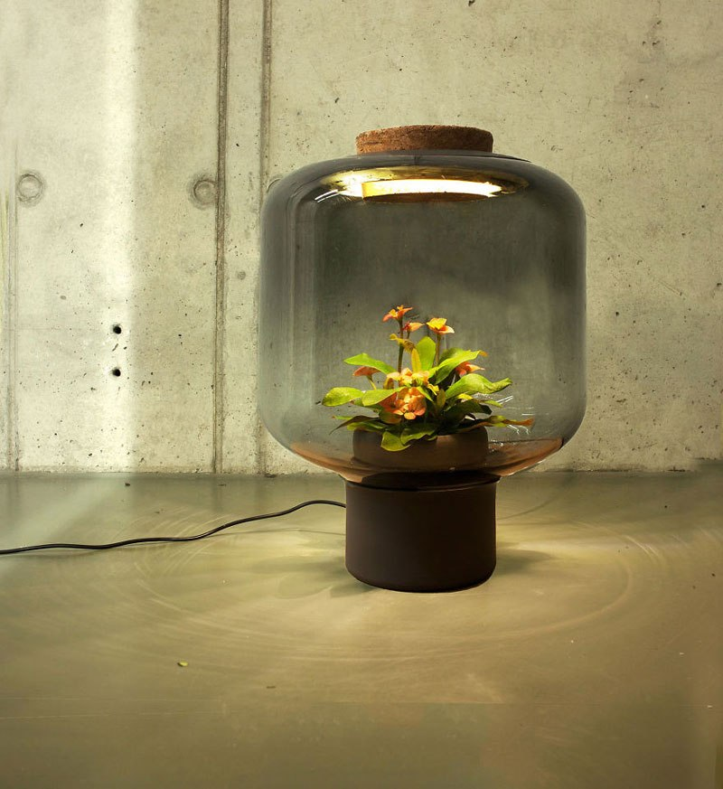 Plant Lamp 7