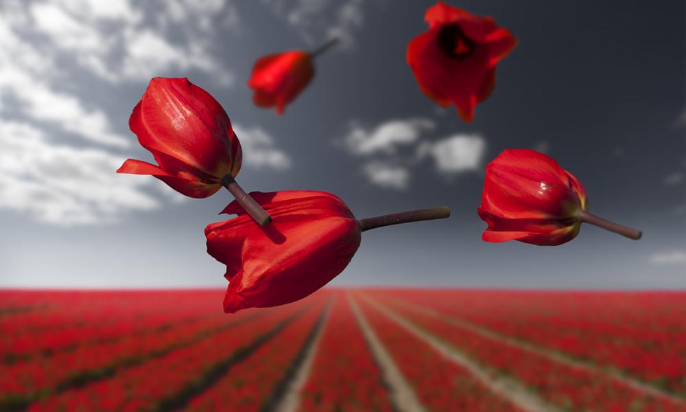 Gravity series: Flower Power