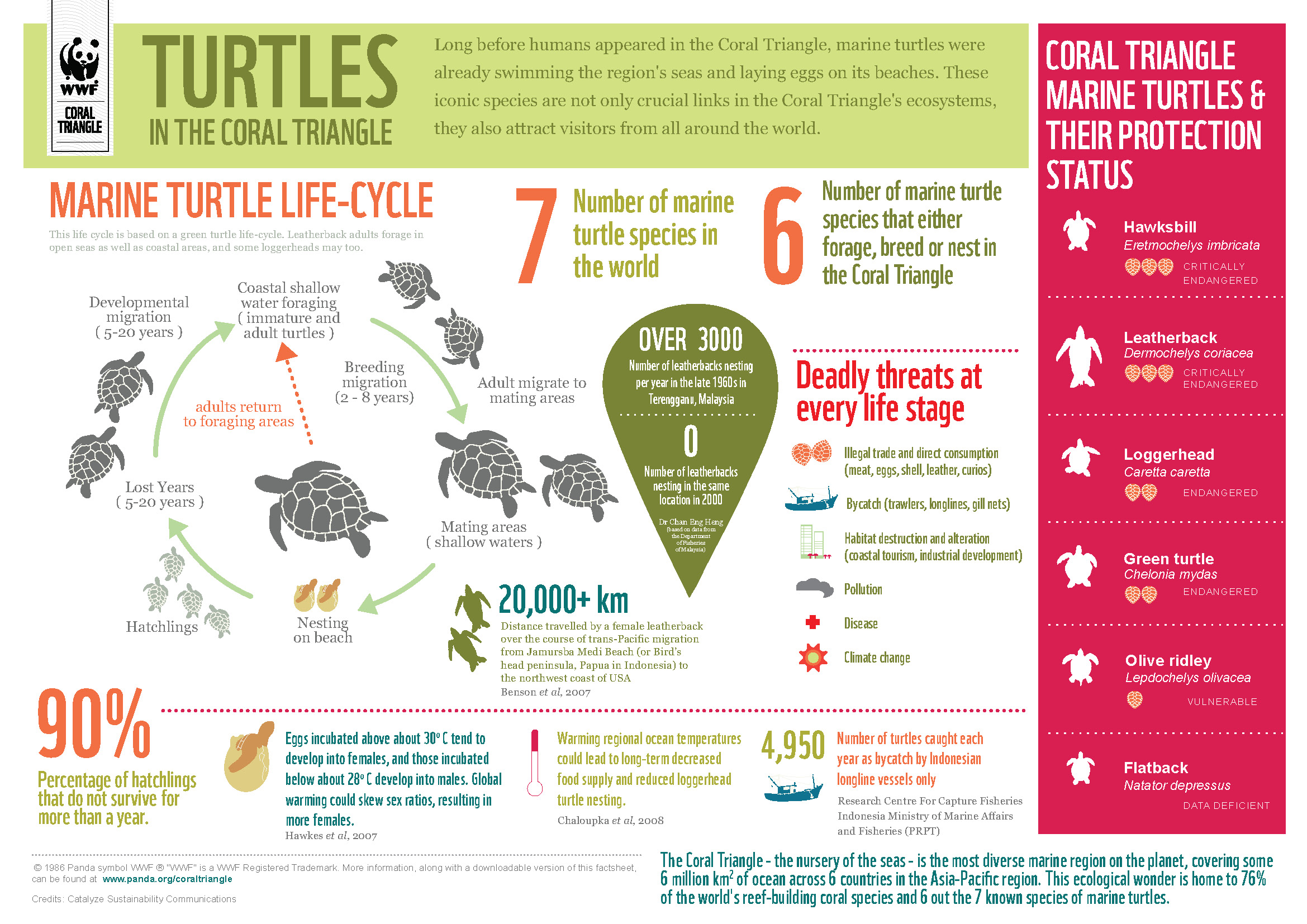 Turtles in the Coral Triangle Infographic