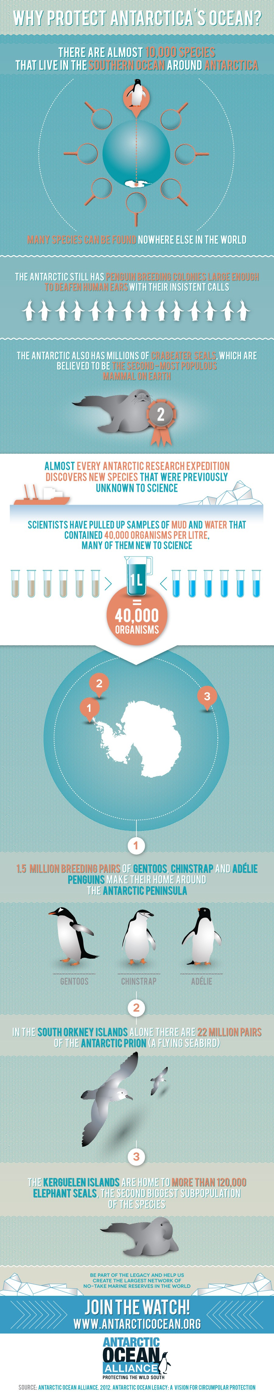 Why Protect Antarctica's Ocean Infographic