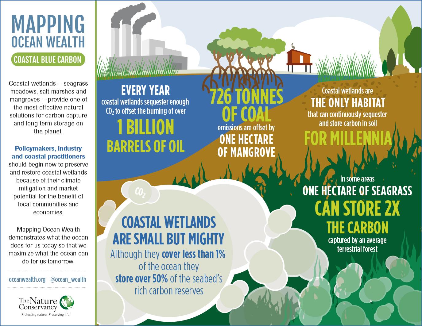 Coastal Blue Carbon Infographic