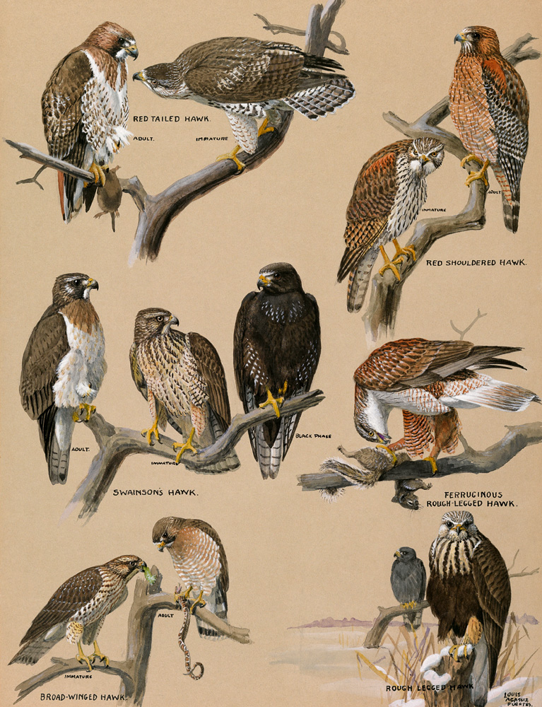 National Geographic Infographics: Birds