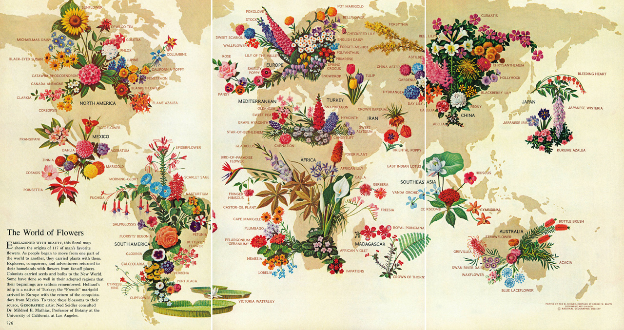 National Geographic Infographics: Plants