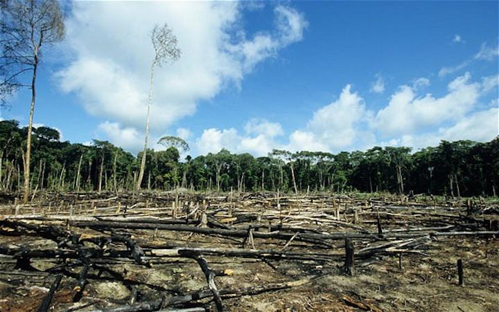 Which Countries Destroy The Environment The Most (And Least)?
